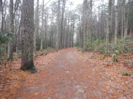 Pandapas Pond Poverty Creek Trail System Jefferson National Forest