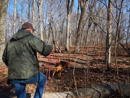 Blue Ridge Bloodhound Search & Rescue Bloodhound Man Trailing Bloodhound tracking