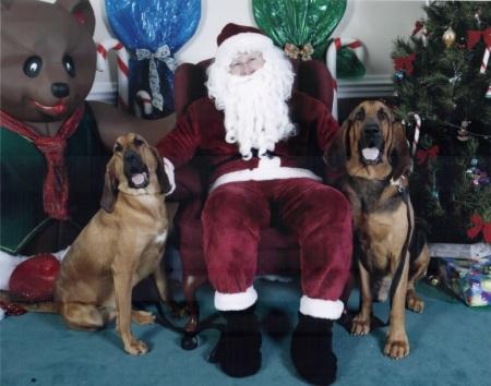 Dogs visit Santa Clause