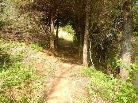Trail Nut 10K Falling Creek Park Bedford