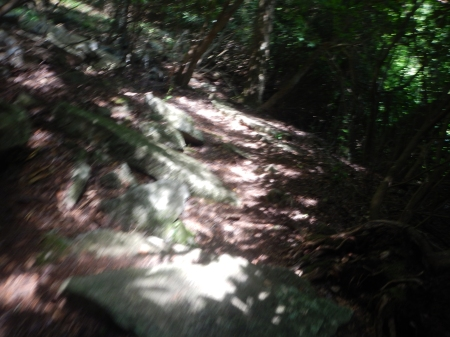Here's a bad photo of the trail.