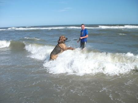 Bloodhound play in ocean