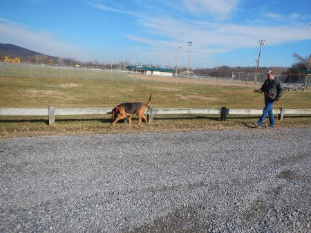 bloodhound tracking