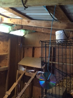 Inside the coop
