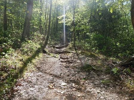 Jacobs Ladder Trail Poverty Creek Trail System Pandapas Pond