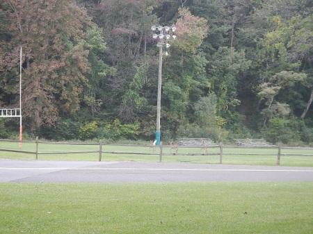 Cool Springs Park Deer
