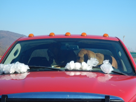 Scent articles tucked under the windshield wipers.