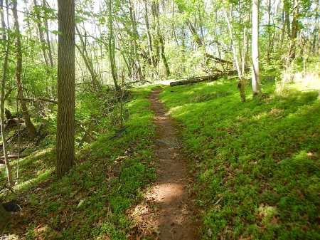 Trail Nut Half Marathon Mountain Junkies RNUTS