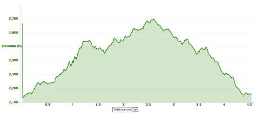 trail run elevation