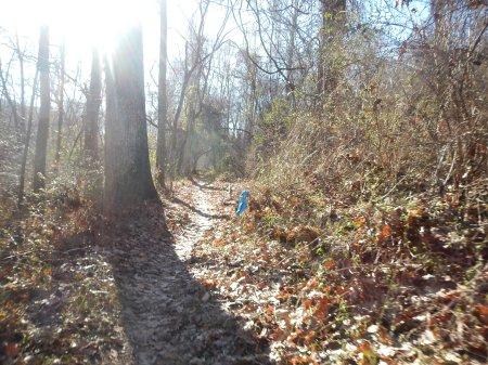 Frozen Toe 10K Chestnut Ridge Loop Trail