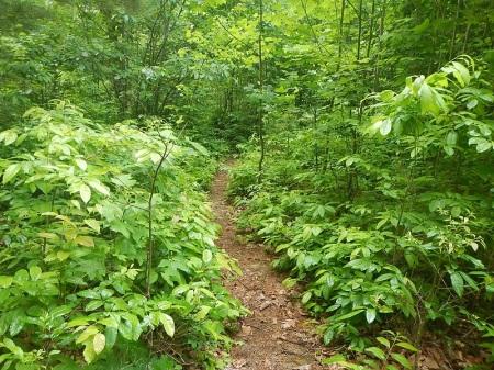 Draper Mountain Bike Trails