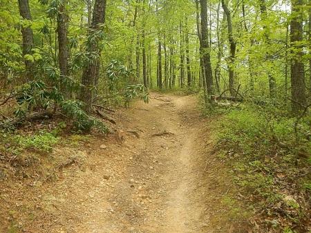 Horse Nettle Trail Pandapas Pond Poverty Creek Trail System
