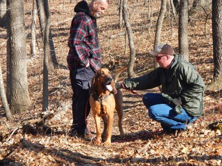 Blue Ridge Bloodhound Search & Rescue Bloodhound Man Trailing Bloodhound tracking