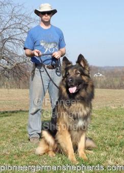 king size german shepherd