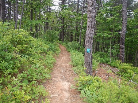 Conquer the Cove 25K trail race