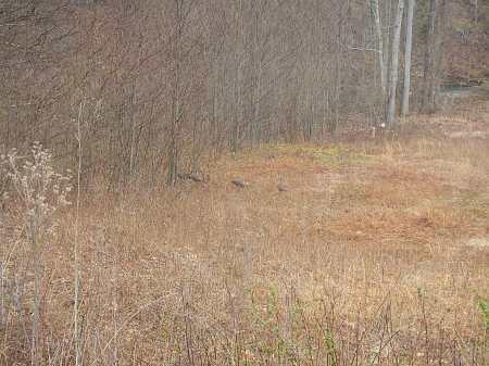 Spotted some wild turkeys.