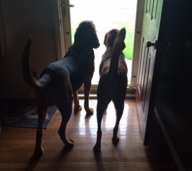 bloodhounds on guard