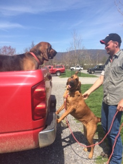 bloodhound search & rescue