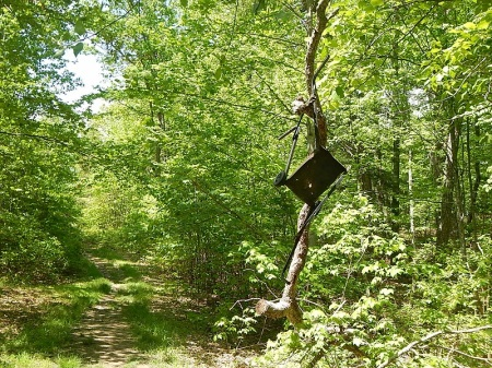 Snake Root Trail Poverty Creek Trail System Pandapas Pond