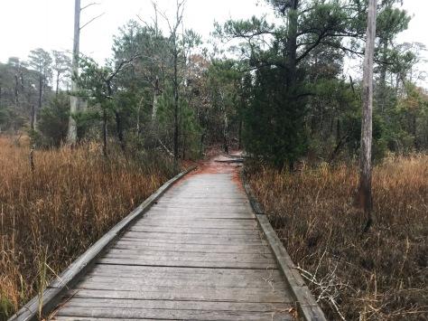 Seashore Nature Trail 50K Seashore 50K