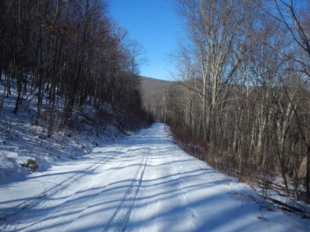 Trail Running Forest Road