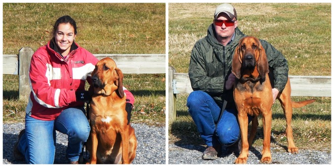 Bloodhound Search & Rescue Training man trailing tracking Blue Ridge Bloodhounds